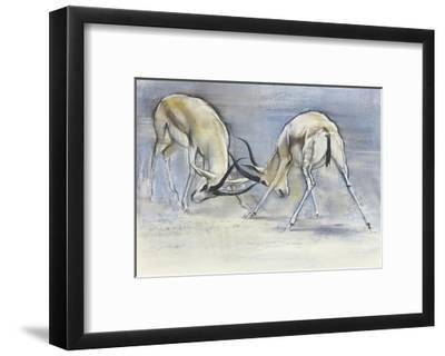 Sand Gazelles, 2009