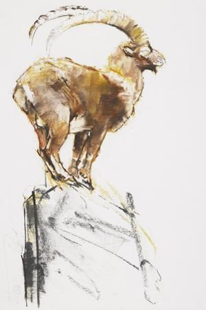 Stambecco d'Oro, 2005 by Mark Adlington