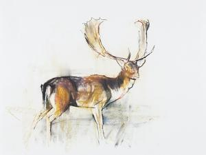 Study of a Stag by Mark Adlington