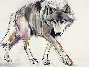 Wolf by Mark Adlington