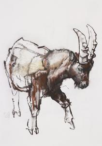 Young Ibex, Gran Paradiso, 2005 by Mark Adlington