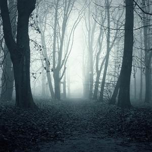 Forest by Mark Ashkenazi
