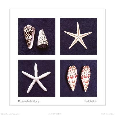 Seashells Study