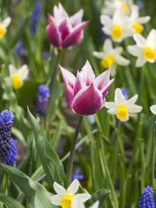 Mixed Spring Bulbs by Mark Bolton
