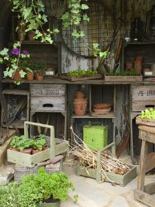 Potting Shed in Garden at Hampton Court Flower Show by Mark Bolton