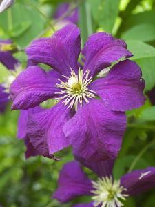 Purple Flowers by Mark Bolton