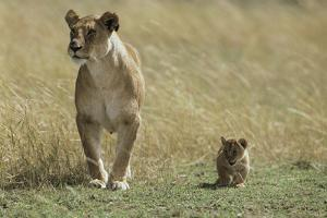 Lioness and Cub by Mark C. Ross