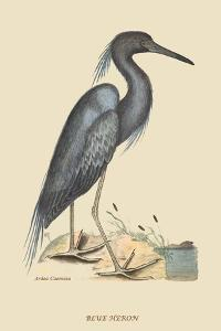 Blue Heron by Mark Catesby