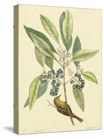 Catesby Bird and Botanical V