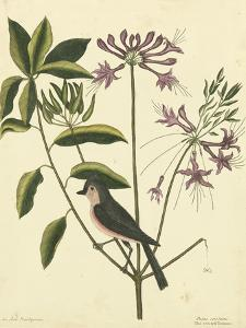 Catesby Bird & Botanical I by Mark Catesby