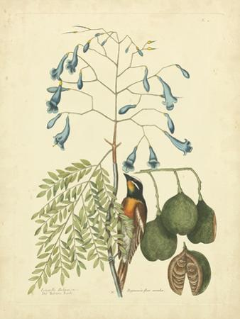 Catesby Bird & Botanical II by Mark Catesby