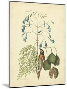 Catesby Bird & Botanical II by Mark Catesby