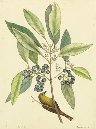 Catesby Bird & Botanical V