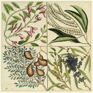 Catesby Botanical Quadrant IV by Mark Catesby