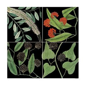 Graphic Botanical Grid IV by Mark Catesby