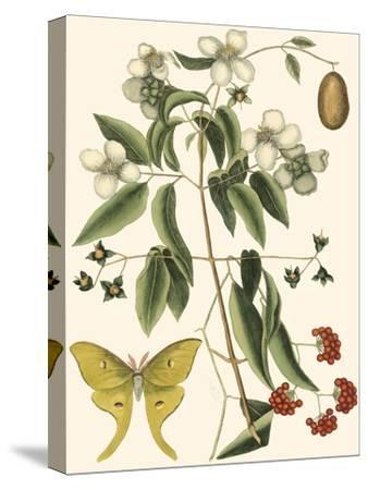 Small Catesby Butterfly and Botanical III