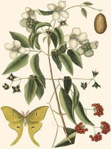 Small Catesby Butterfly and Botanical III by Mark Catesby