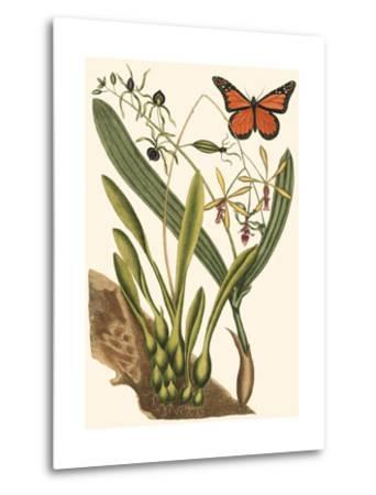 Small Catesby Butterfly and Botanical IV