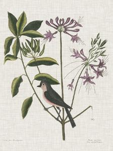 Studies in Nature I by Mark Catesby