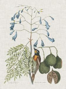 Studies in Nature II by Mark Catesby