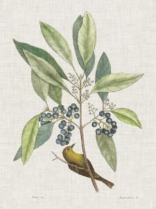 Studies in Nature IV by Mark Catesby