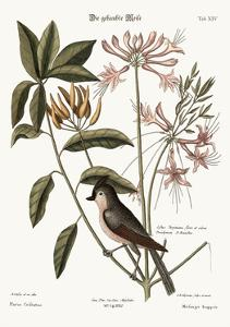 The Crested Titmouse, 1749-73 by Mark Catesby