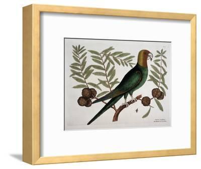 The Parrot of Carolina