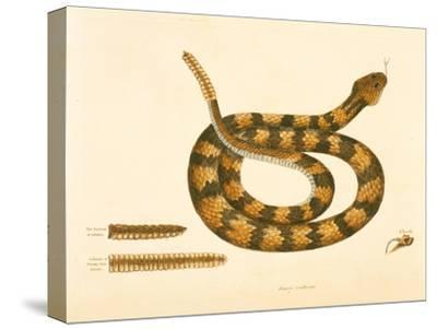 Viper Caudison Snake, Rattlesnake, Plate 41, Vol. 1, from the 'Natural History of Carolina,…