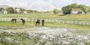 A Day in the Paddock by Mark Chandon