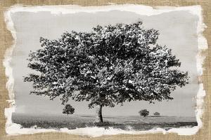 Prairie Lands by Mark Chandon