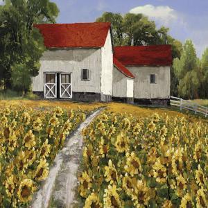 Sunflower Path by Mark Chandon