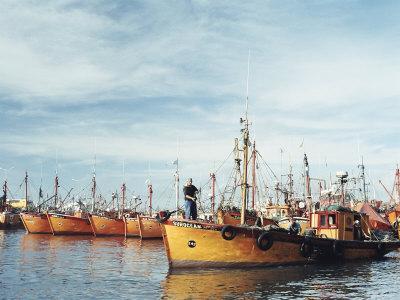 Fishing Fleet in Port, Mar Del Plata, Argentina, South America
