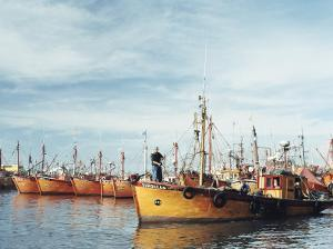 Fishing Fleet in Port, Mar Del Plata, Argentina, South America by Mark Chivers
