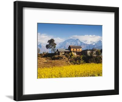 Mustard Fields with the Annapurna Range of the Himalayas in the Background, Gandaki, Nepal, Asia