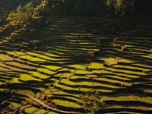 Terraced Rice Fields, Near Pokhara, Gandak, Nepal, Asia by Mark Chivers