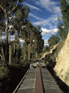 View of Trees from the Roof of the Train from Alausi to Riobamba, Ecuador, South America by Mark Chivers