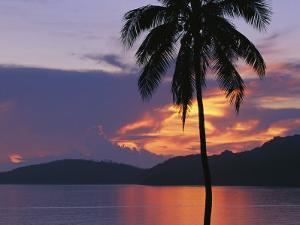 Palm Tree Silhouetted against Fiery Clouds and Sea at Sunrise by Mark Cosslett