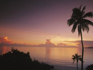 Palm Trees Silhouetted against Sky and Ocean at Sunrise by Mark Cosslett