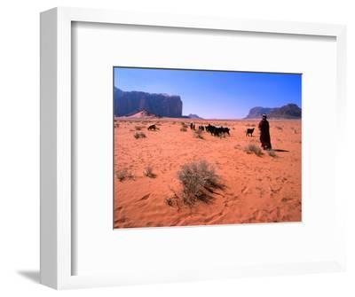 Bedouin Woman Herding Flock of Sheep and Goats Between, Wadi Rum National Reserve, Jordan