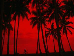 Cyclist and Palm Trees Silhouetted Against Red Sky at Sunset in Midigama, Southern, Sri Lanka by Mark Daffey