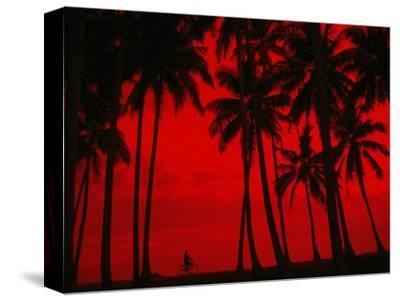 Cyclist and Palm Trees Silhouetted Against Red Sky at Sunset in Midigama, Southern, Sri Lanka