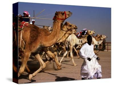 Official Starter Runs Away From Camels at Start of Race at Kuwait Camel Racing Club, Kuwait