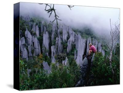 Person Taking Photograph in the Limestone Forest, Gunung Mulu National Park, Malaysia