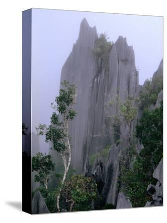 The Pinnacles Limestone Fores, from the Lookout on Gunung Api, Gunung Mulu NP, Sarawak, Malaysia