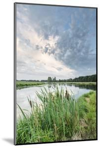 Bullrushes on Bank and Still Waters of River Mark, Breda, North Brabant, The Netherlands (Holland) by Mark Doherty
