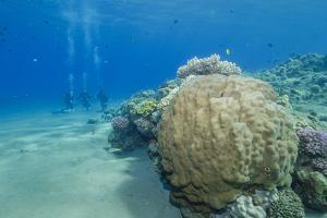 Coral Reef and Three Scuba Divers, Naama Bay, Sharm El-Sheikh, Red Sea, Egypt, North Africa, Africa by Mark Doherty