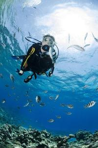 One Scuba Diver Diving in Shallow Water by Mark Doherty