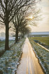 The Oude Trambaan Tree Lined Cycle Path, Rijsbergen, North Brabant, The Netherlands (Holland) by Mark Doherty