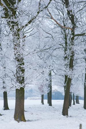 Trees Covered with Ice Crystals, Breda, North Brabant, the Netherlands (Holland), Europe