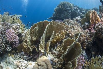 Tropical Coral Reef Scene in Natural Lighting, Ras Mohammed Nat'l Pk, Off Sharm El Sheikh, Egypt by Mark Doherty